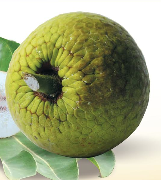 UWI to host inaugural international conference on the commercialization of Breadfruit