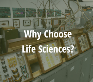 Why Choose Life Sciences